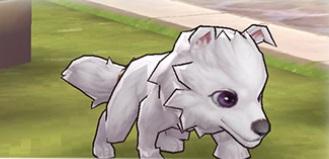 白犬ティモーシー