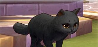 黒猫クルロ
